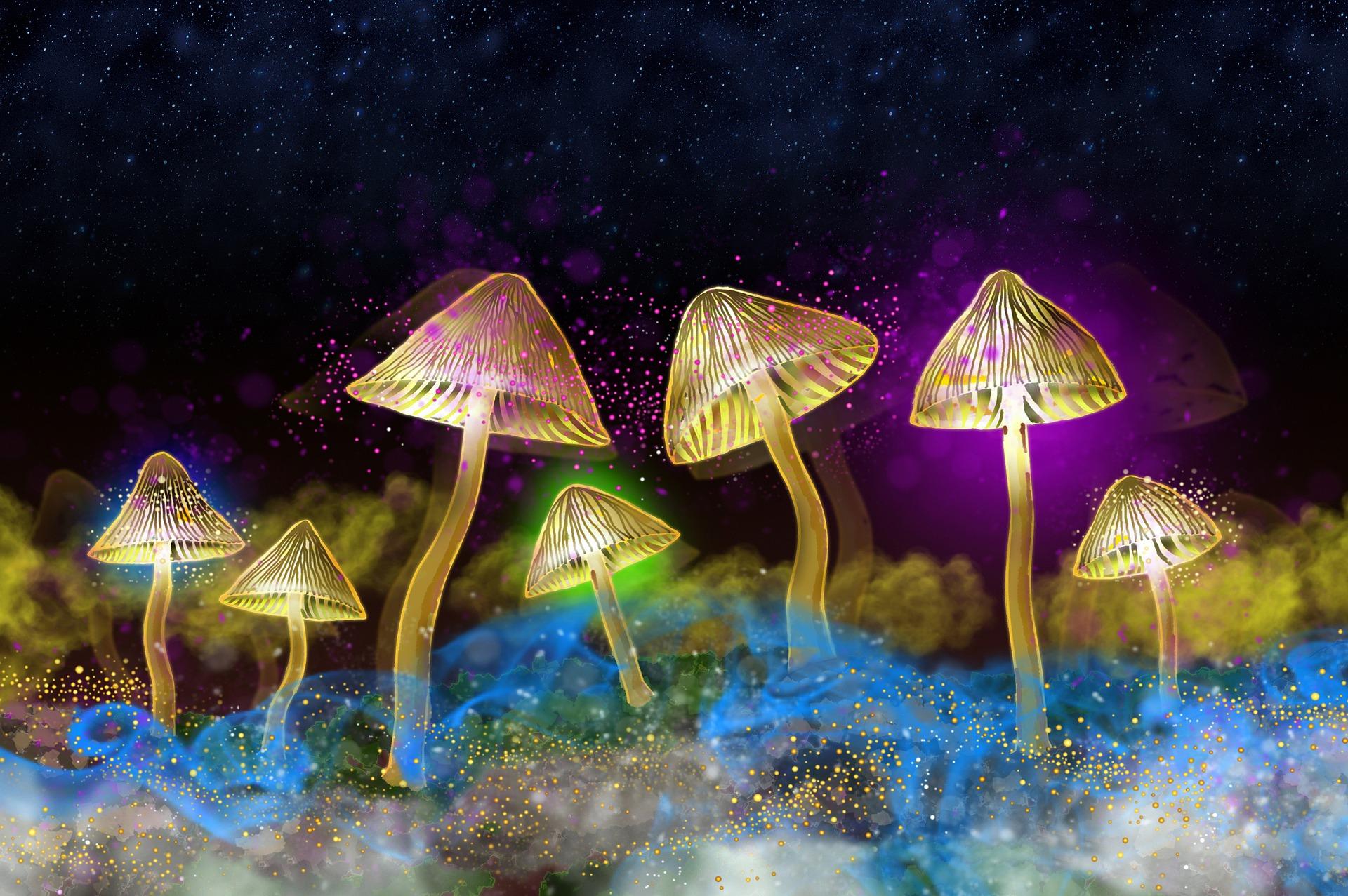 Wie lange sind Pilze (Magic Mushrooms) nachweisbar?